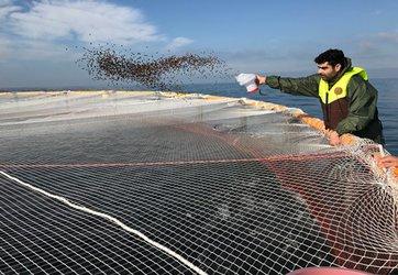 آغاز فاز اجرایی مطالعه، امکان سنجی و ارائه راهکارهای لازم در زمینه پرورش ماهی در قفس های دریاییدر حوزه آبهای گیلان در پژوهشکده آبزی پروری آبهای داخلی کشور