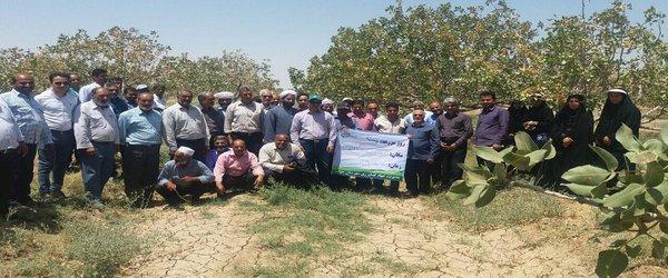 برگزاری روز مزرعه پسته با مشارکت محقق آبیاری بخش تحقیقات فنی و مهندسی خراسان رضوی