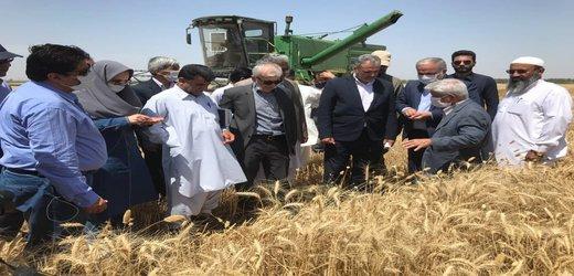 بازدید جناب آقای دکتر خاوازی مقام عالی وزرات جهاد کشاورزی به اتفاق جناب آقای دکتر بازرگان معاون محترم وزیر ورئیس سازمان تحقیقات وآموزش وترویج کشاورزی وهیات همراه از مزارع تولید گندم در جنوب بلوچستان