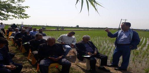 در کارگاه آموزشی–ترویجی وجین مکانیزه برنج با حضور مدرس مرکز هراز در شهرستان جویبار بر رعایت نکات فنی ویژه شرایط شیوع ویروس کرونا تاکید شد