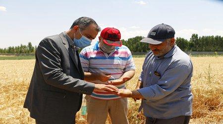 گزارش تصویری برداشت گندم از مزرعه آموزشی-تحقیقاتی دانشگاه آزاد اسلامی بجنورد
