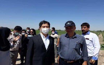 بازدید سفیر ژاپن به همراه رئیس موسسه تحقیقات فنی و مهندسی و محققان مرکز تحقیقات و آموزش کشاورزی و منابع طبیعی آذربایجان شرقی از روند اجرای پروژه استقرار کشاورزی پایدار