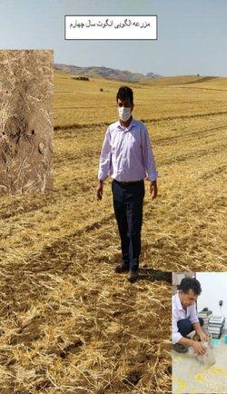 بازدید از سایت الگویی تناوب لگوم-غلات جهت بررسی رطوبت خاک توسط عضو هیات علمی مرکز تحقیقات و آموزش کشاورزی و منابع طبیعی استان اردبیل