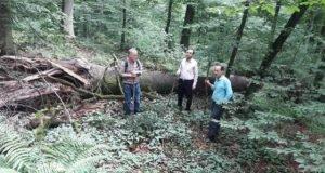 بازدید رئیس مرکزتحقیقات و آموزش گلستاناز طرح های گروه جنگل بخش تحقیقات منابع طبیعی و آبخیزداری در شصت کلا